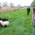 1008x646_enfants-accueilli-moutons-bouguenais